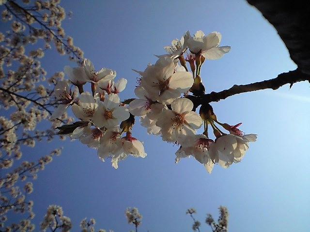 ちょっとした春の日。